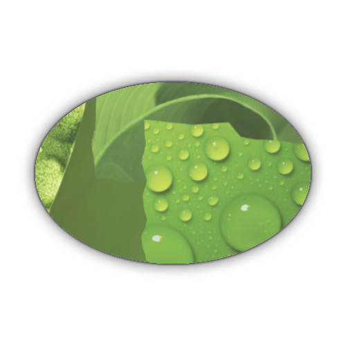 Green Album Stickers ovale