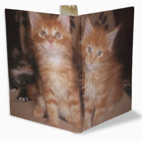Maine coon cats Diario