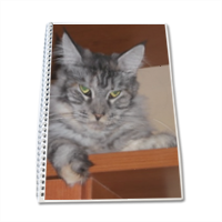 MAINE COON Block Notes A4