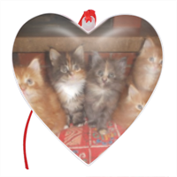 Kittens Cuore Natale