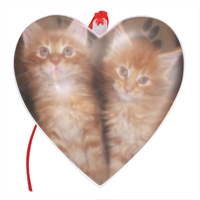 Maine coon cats Cuore Natale