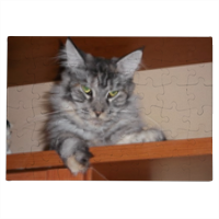 MAINE COON Foto su Puzzle A3-A4