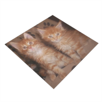 Maine coon cats Bandana