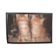 Maine coon cats Tappeto in gomma 60x40