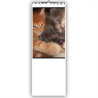 Best Friends Calendario slim