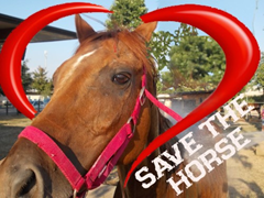 Save Horse2